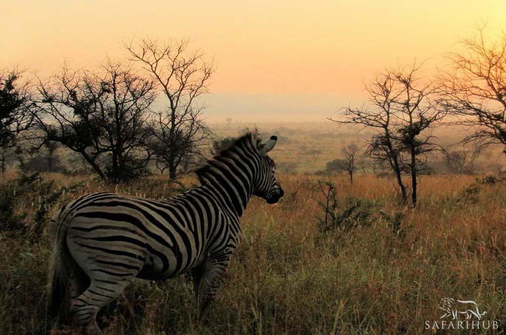 The Kingdom of the Zulu's