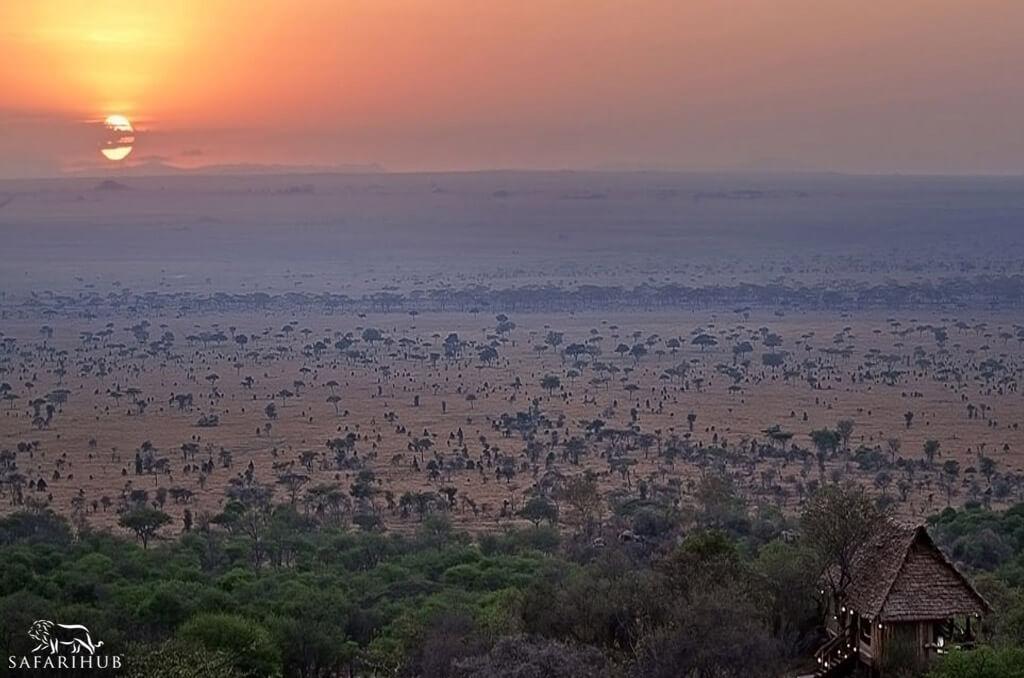 Serengeti To Arusha
