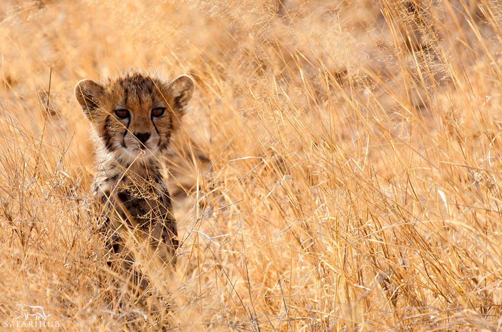 Nairobi to Shaba Game Reserve
