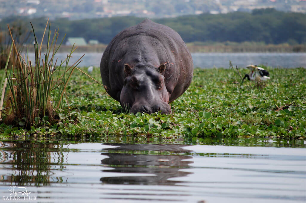 Shaba Game Reserve to Lake Naivasha