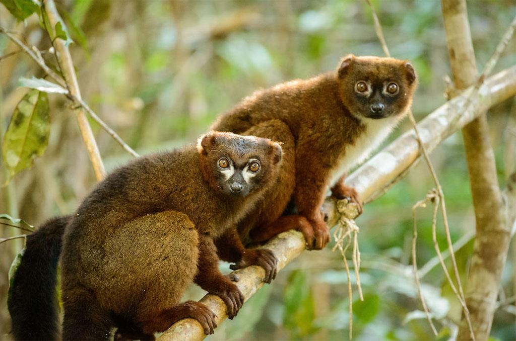 Ambalavao - Ranomafana National Park