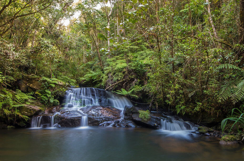 Andasibe (Visit Analamazaotra Reserve & Vakona Private Park)