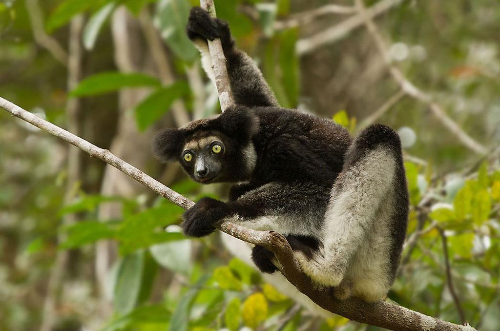 Andasibe (Visit Mantadia National Park and Mitsinjo NGO)