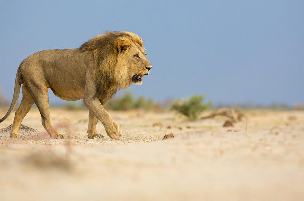 Chobe Day Trip - Botswana