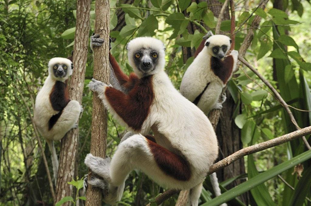 Andasibe (Visit Mantadia National Park & Vakona Private Park)