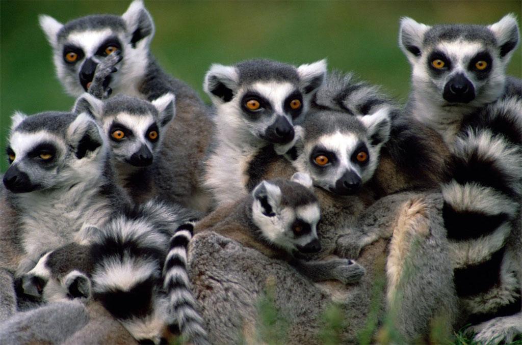 Andasibe (Analamazaotra Reserve & Lemur Island)