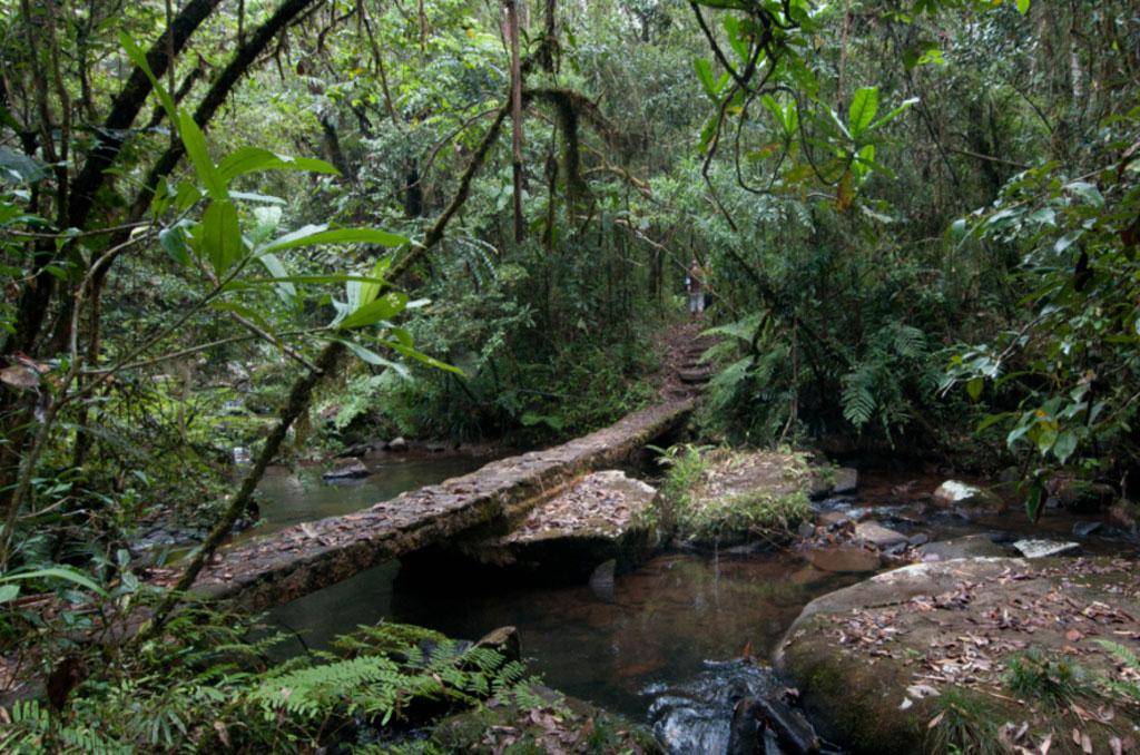 Andasibe (Analamazaotra Reserve & Voimma Reserve)
