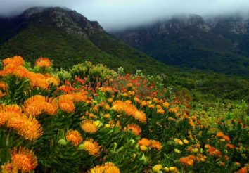 Garden route splendour