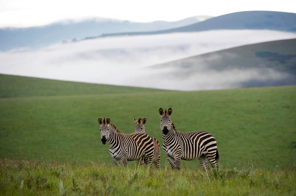 Travel by road to Chelinda Lodge in Nyika National Park