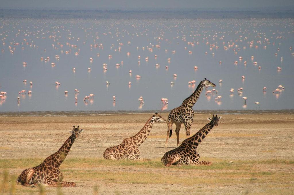 Arusha to Lake Manyara