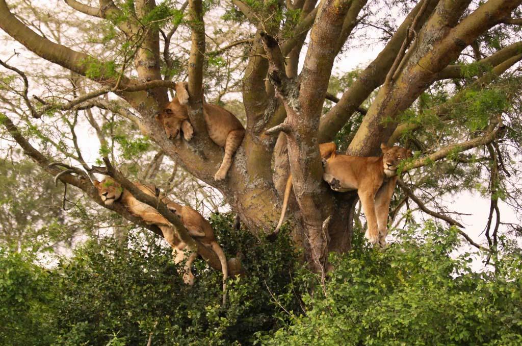Arusha to Lake Manyara National Park