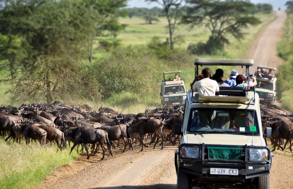 Tarangire  – Serengeti National Park