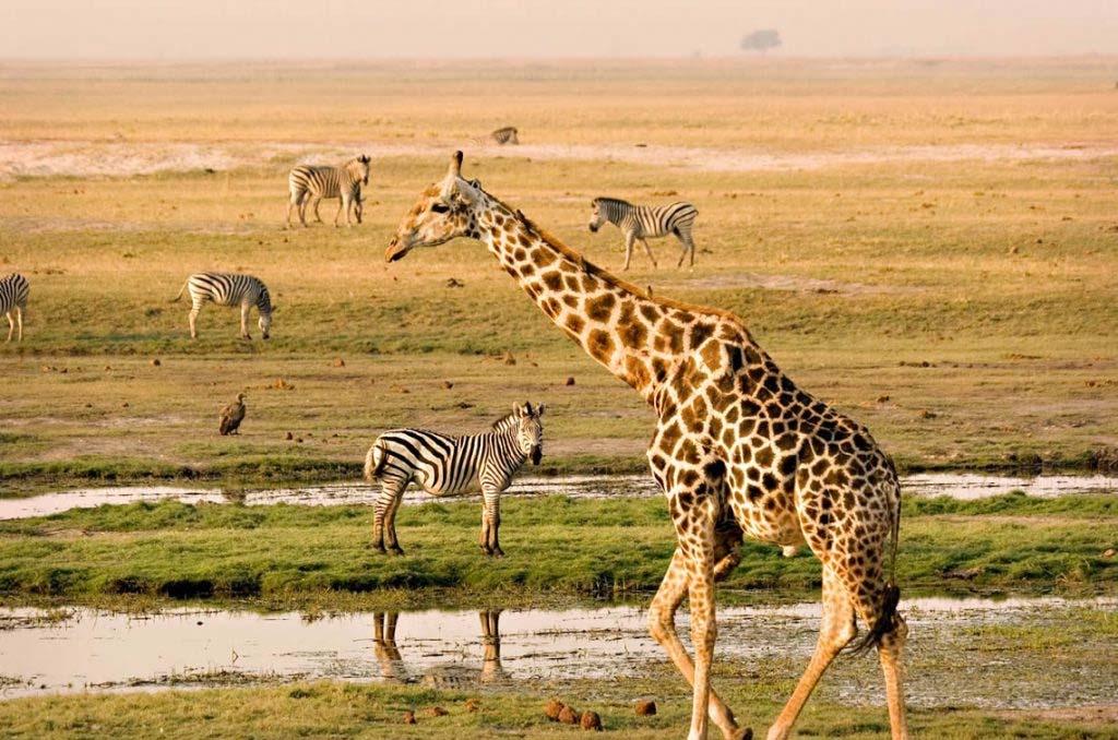 Nairobi - Masai Mara National Reserve