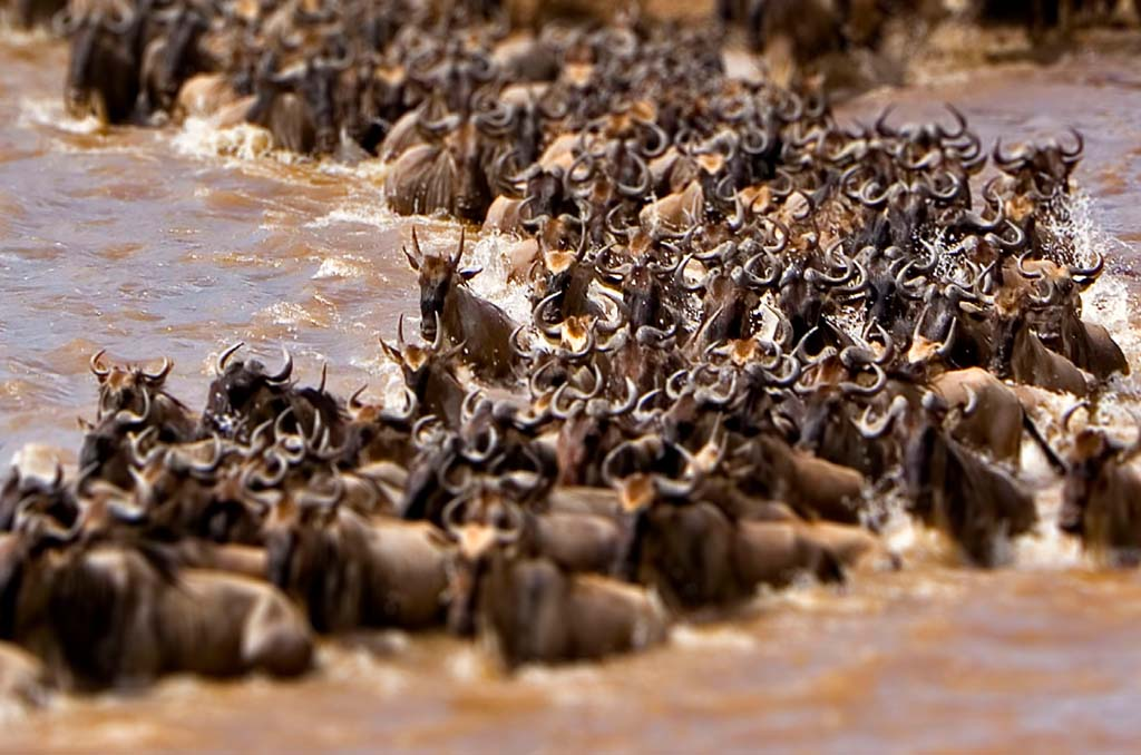 Nakuru to Maasai Mara