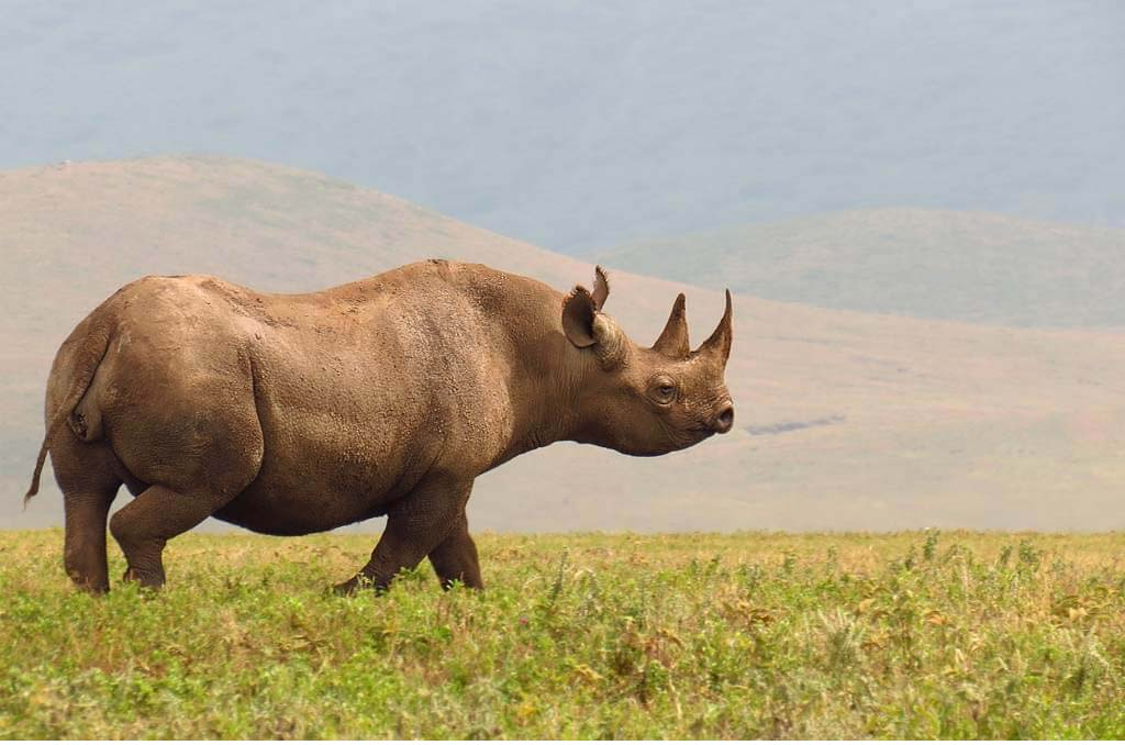 Ngorongoro Crater Visit