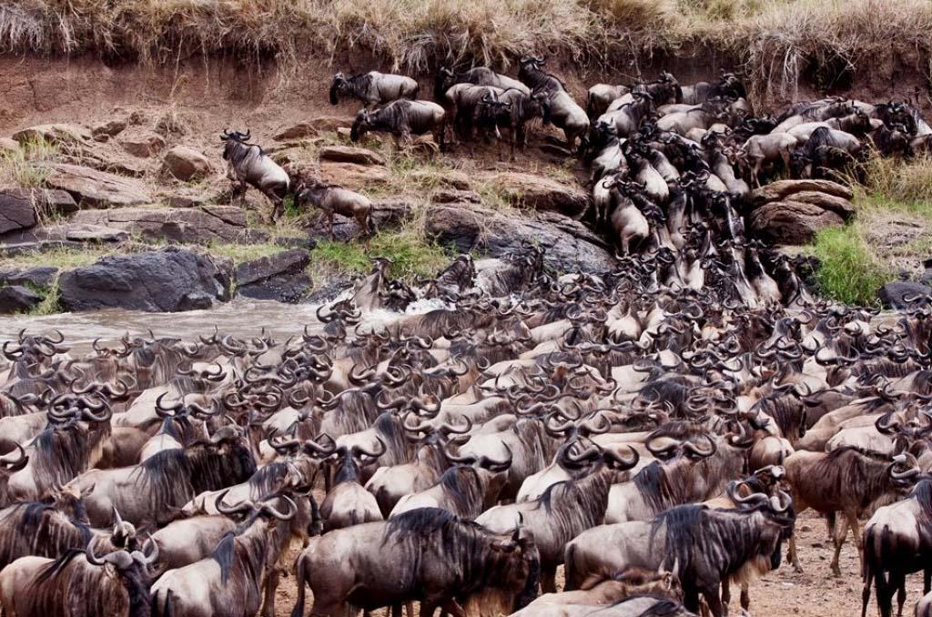 Lake Naivasha to Maasai Mara