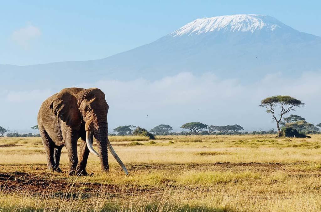 Amboseli – Nairobi