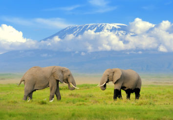 Kili Safari