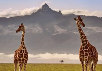 Mount Kenya & Masai Mara Adventure