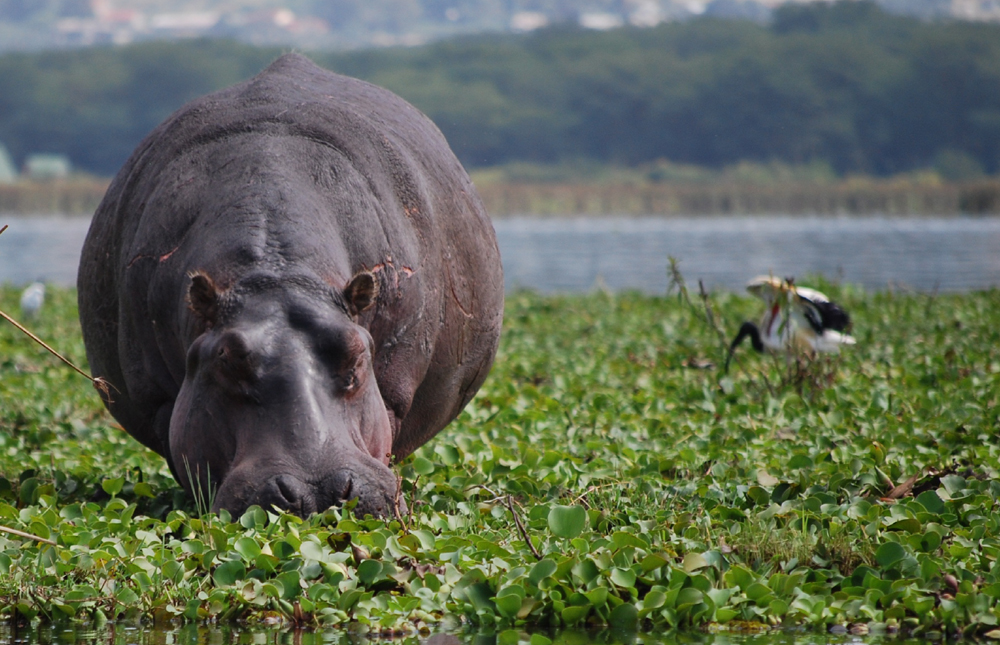 Lake Nakuru National Park – Nairobi