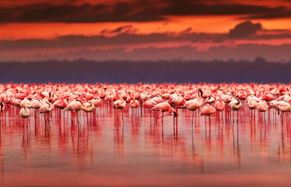 Lake Nakuru National Park – Nairobi