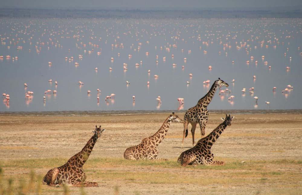 Tarangire Area – Lake Manyara National Park