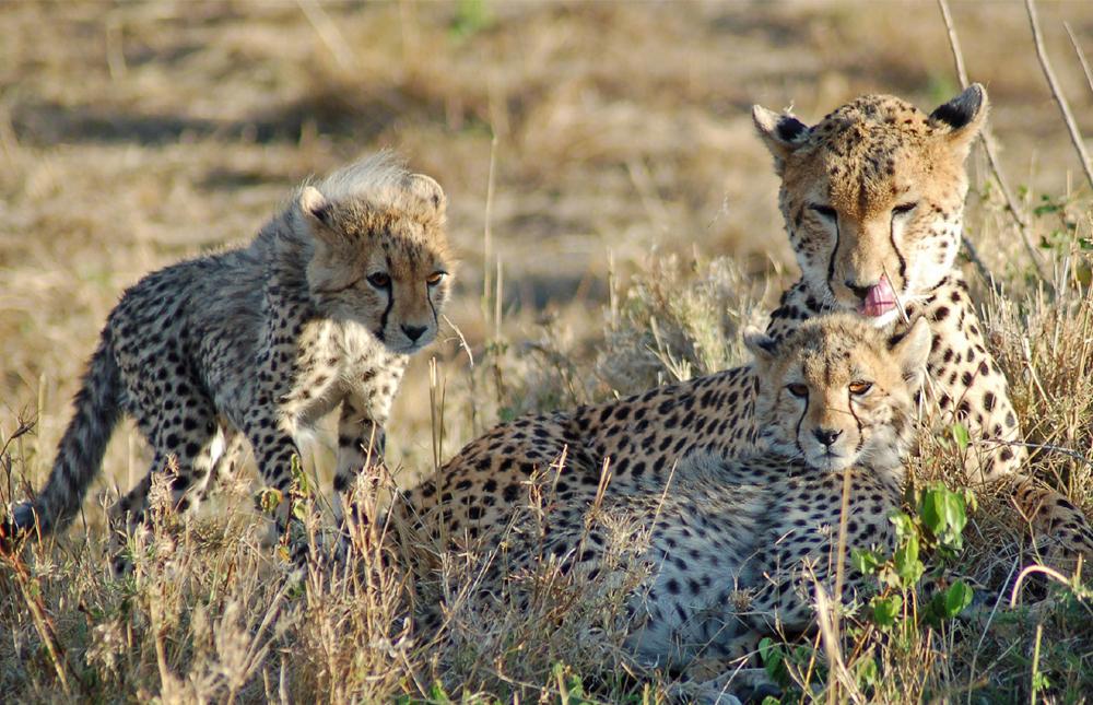Lake Manyara Area – Serengeti National Park