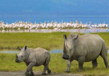 Tanzania & Kenya Highlights Lodge Safari