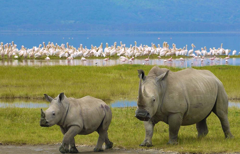 Masai Mara Game Reserve – Lake Nakuru National Park