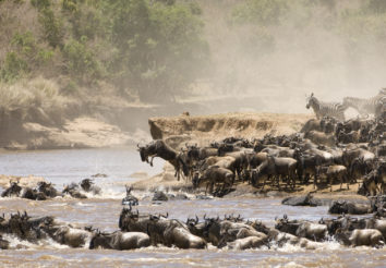 Follow the Migration Camping Safari