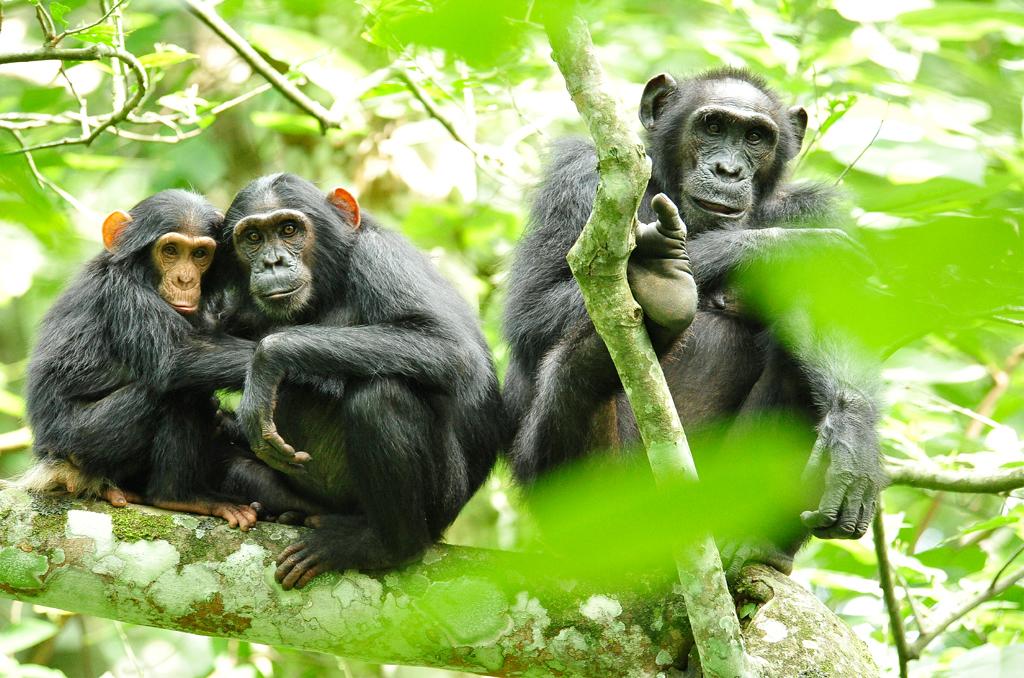 Kibale Forest to Queen Elizabeth National Park
