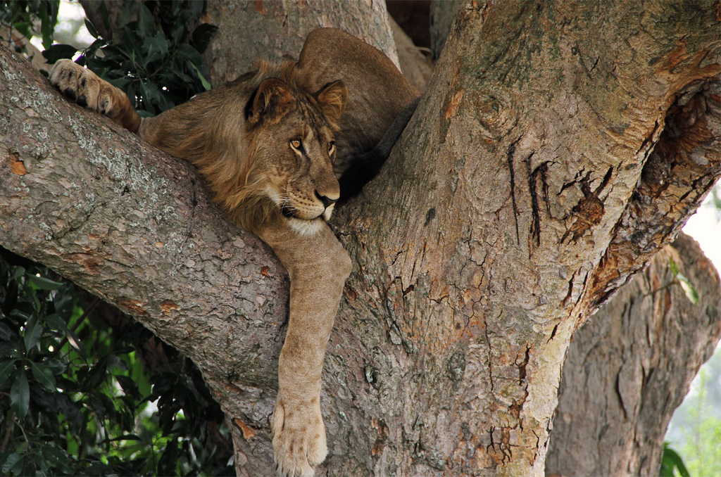 Queen Elizabeth to Bwindi Impenetrable Forest