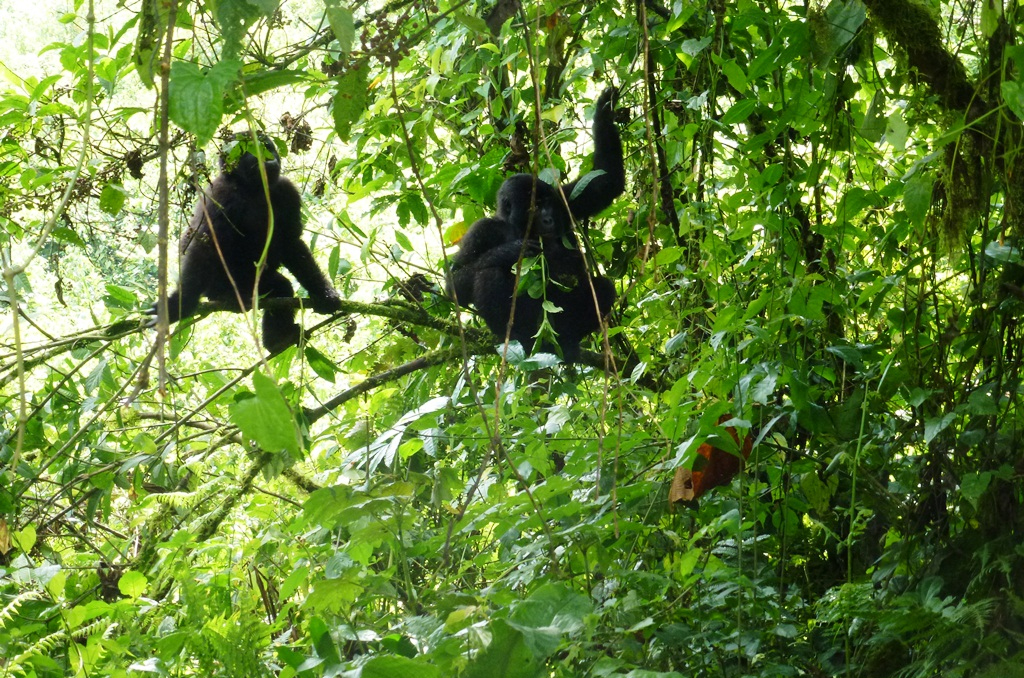 Bwindi Impenetrable National Park to Entebbe Airport