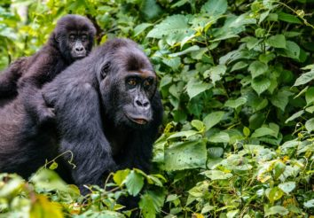 Best of Uganda and Rwanda