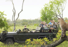 Group Safari