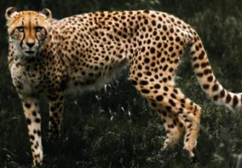 3 Safari Destinations in Tanzania
