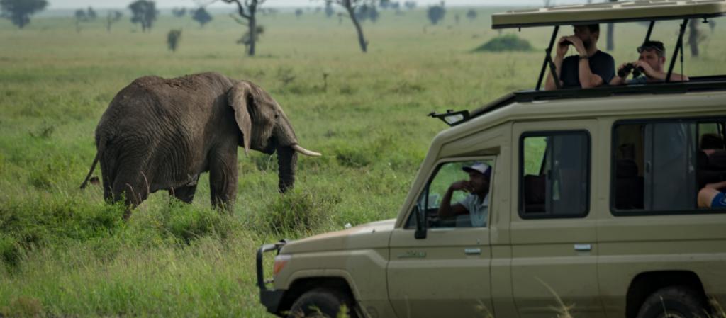 Select an appropriate Safari Destination - Safarihub
