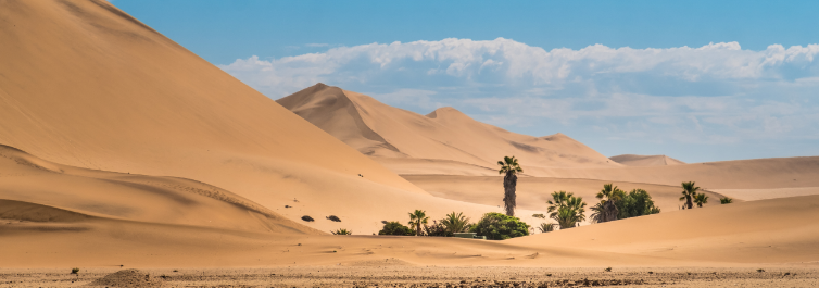 Flora and fauna - Amazing Facts About Namib Desert