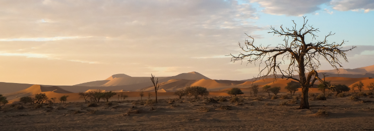 Namib Climate - Amazing Facts About Namib Desert