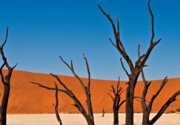 Amazing Facts About Namib Desert