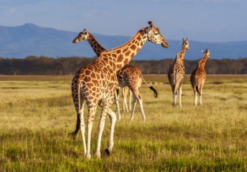 5 Most Endangered Animals in Africa
