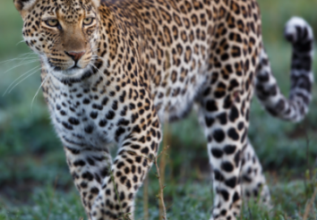 Best African Safari Under $1500