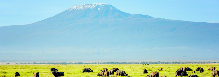 Best Group Safari Package under $1500 - Safarihub