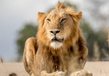 10 Things To Know About Kruger National Park