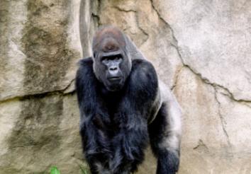 5 Best Rwanda Safari Tour Packages