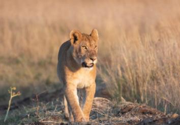 8 Reasons why you should go on Safari with SafariHub