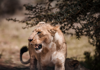 5 Best Game Reserves for Safaris to visit in South Africa