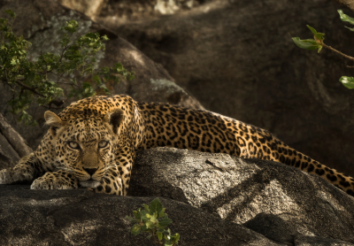 5 Things to know about Tanzania Southern Safari Circuit