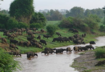 8 Reasons to Hire Safarihub- An Africa Travel Specialist