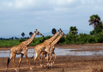 Which is the largest Game Reserve in Africa?